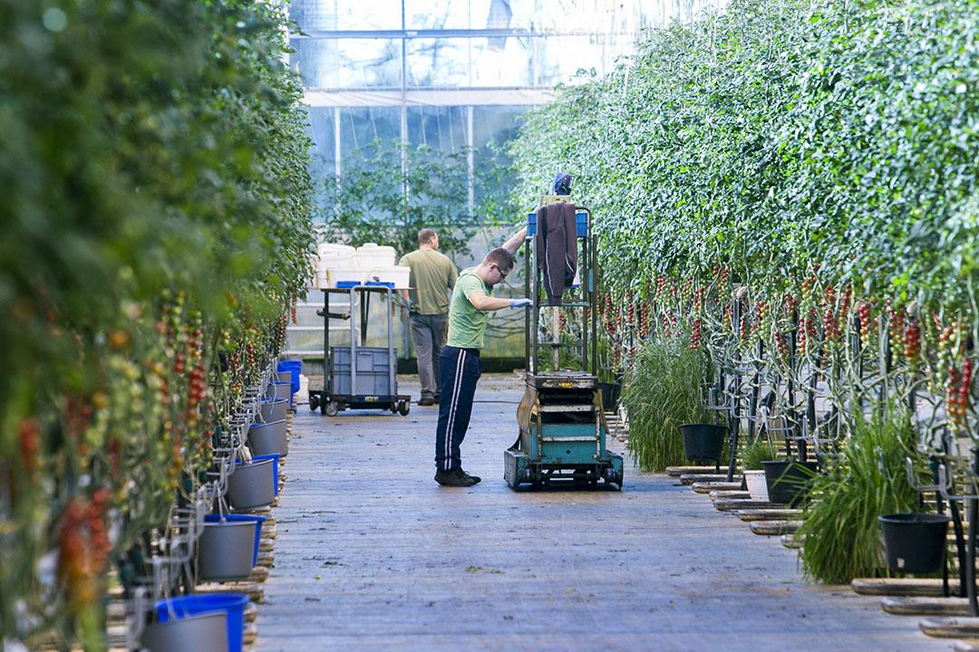 Harvest House is specialist in vruchtgroenten voor groothandel, retail, horeca en foodservice. - Foto: Joep van der Pal