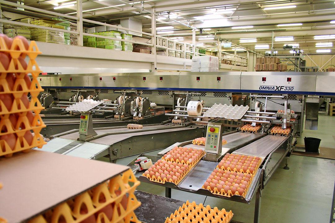 Kwetters eierpakstation bij de hoofdvestiging in Veen (N-Br). - Foto: Hans Bijleveld