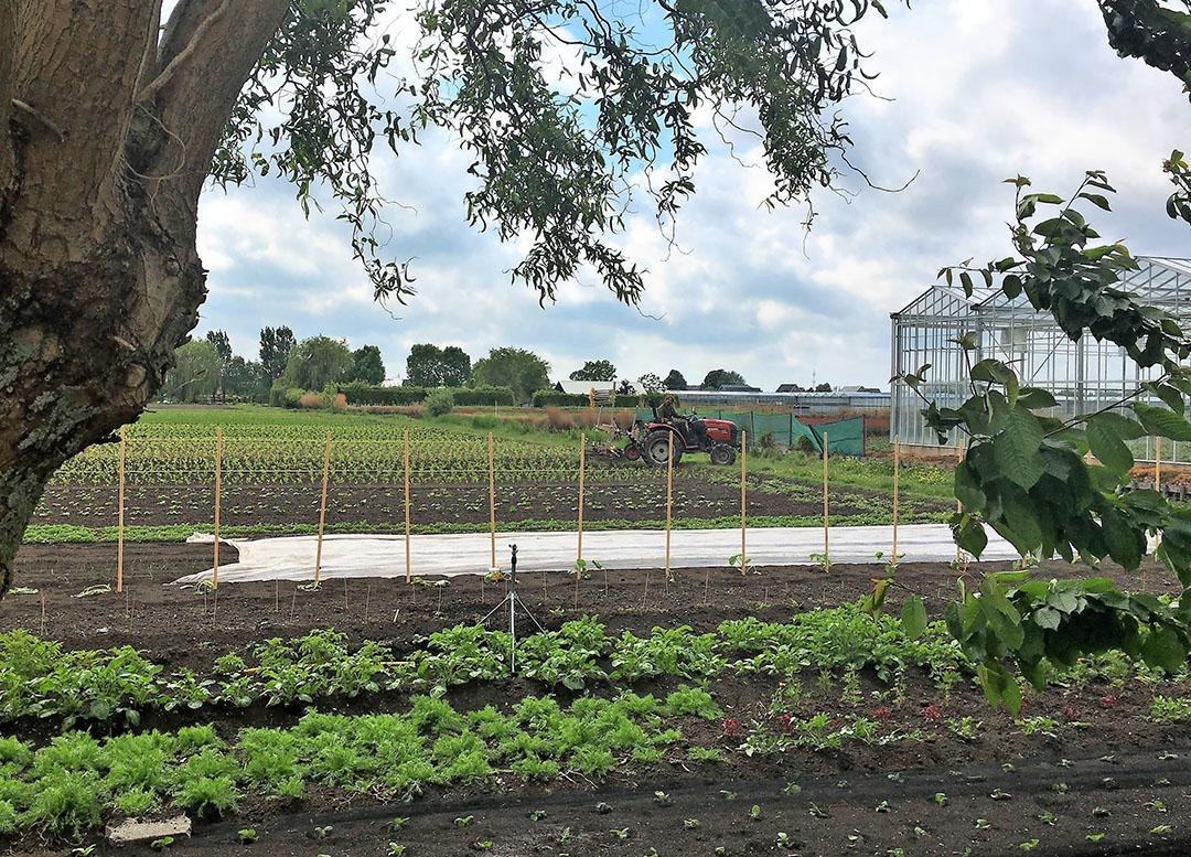 de Dag van de Kringlooplandbouw wordt ook gevierd in de tuinbouw, bijvoorbeeld bij Caring Tuinder David Luyendijk in Roelofarendsveen. - Foto: Ton van der Scheer