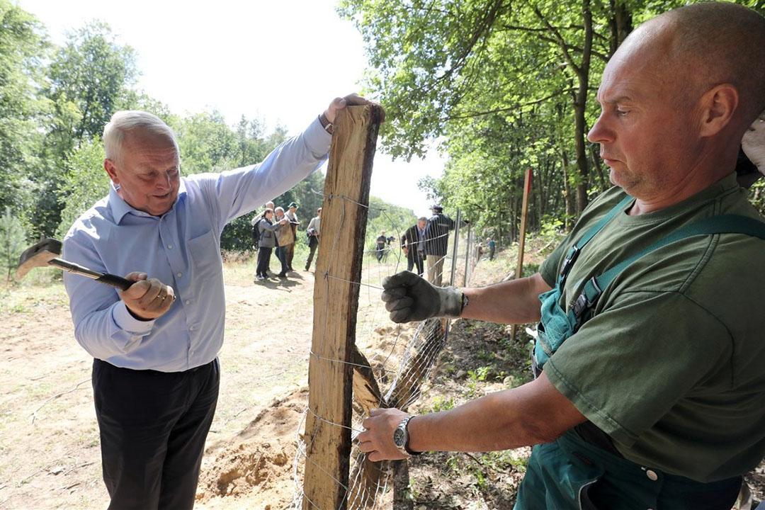 Till Backhaus (links), minister van Landbouw van Mecklenburg-Voor-Pommeren en Mathias Schober, bosbeheerder, werken aan een wildbeschermingshek tegen Afrikaanse varkenspest bij de Duits-Poolse grens. - Foto: dpa Picture-Alliance