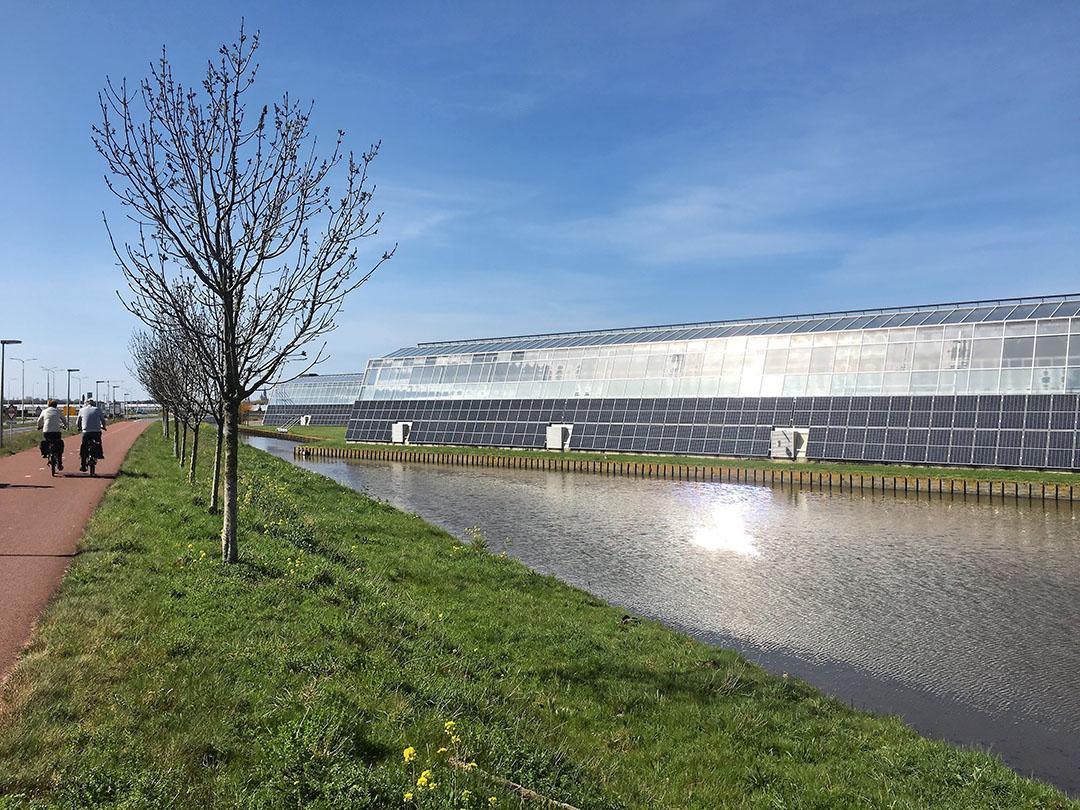 Kassen en zonnepanelen voelt als een logische combi, zoals hier in Pijnacker. - Foto: Ton van der Scheer