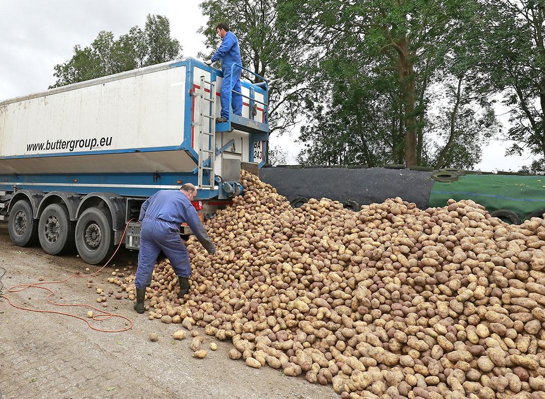 Het aanbod voeraardappelen is nog beperkt en het is helemaal de vraag of daar veel verandering in gaat komen. - Foto: Ruud Ploeg