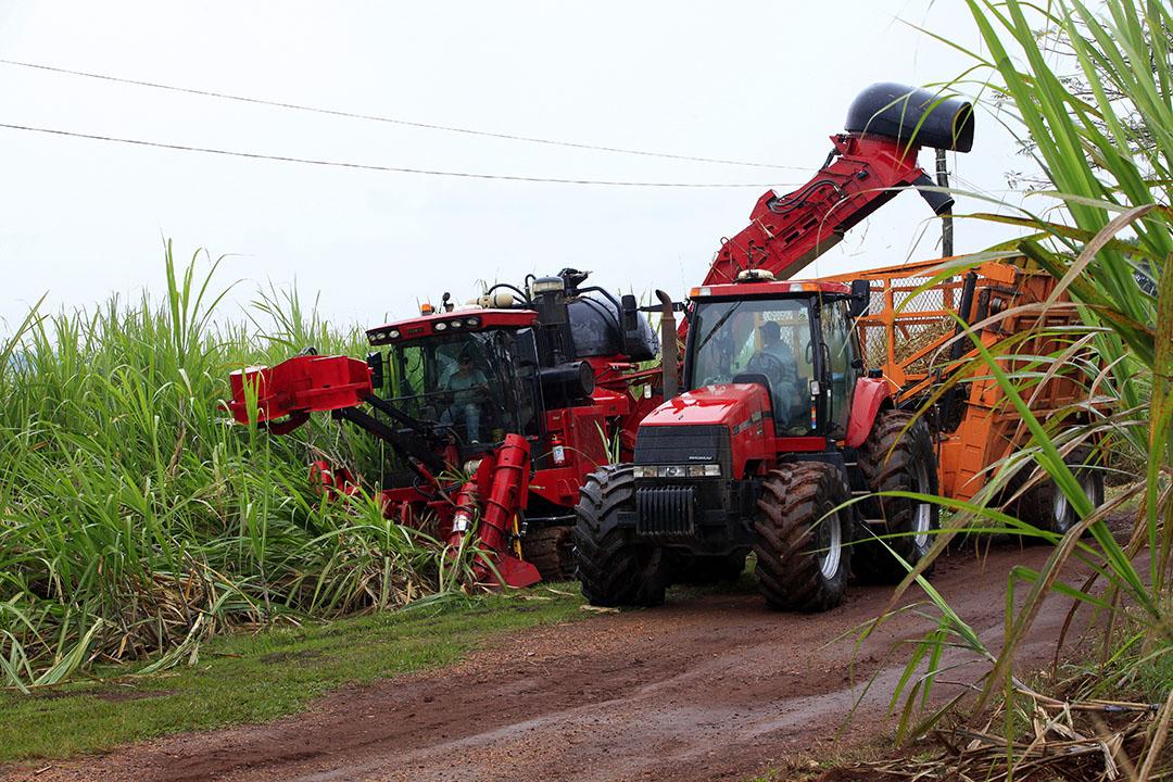 Oogst van suikerriet in Brazilië. Foto: Henk Riswick