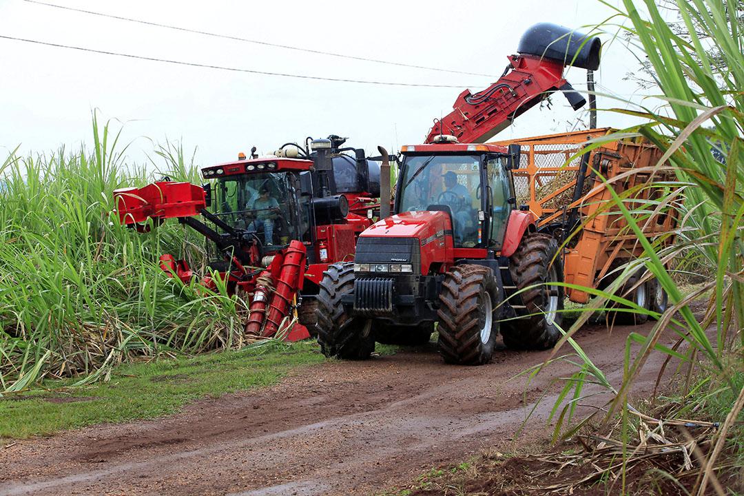 Het aanbod suiker vanuit Brazilië is groot door gunstige weersomstandigheden voor de rietsuikeroogst. - Foto: Henk Riswick