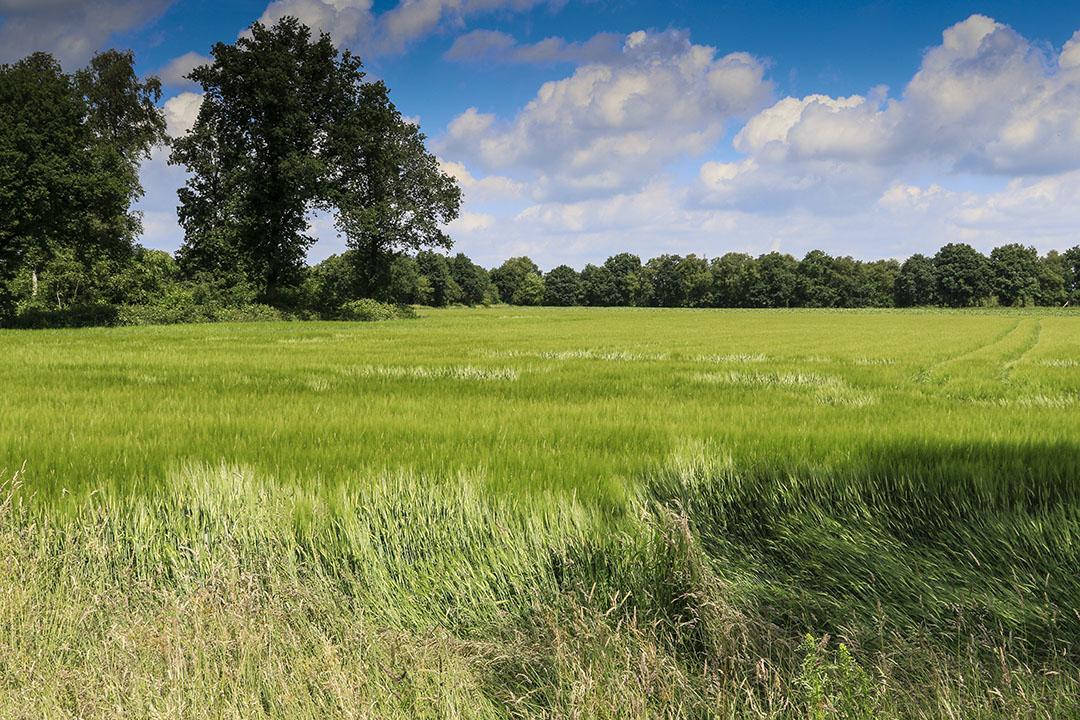 'Heel veel boeren en tuinders hebben hun landbouwgrond – met gebruikmaking van de huidige vrijstelling – al geherwaardeerd in de afgelopen jaren'. Foto: Jan Willem van Vliet