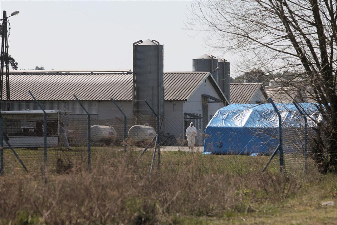 In de eerste helft van dit jaar waren er honderden uitbraken met het H5N8-virus bij pluimveebedrijven in Oost- en Centraal-Europa, zoals hier op een kalkoenenbedrijf in het westen van Polen. - Foto: ANP