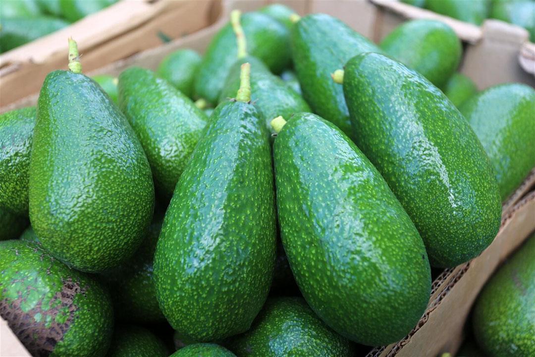 Avocado's. Ideaal klimaat Ethiopië heeft ideale klimaatomstandigheden om het hele jaar door fruit zoals mango, sinaasappels en avocado's te telen. Foto: ANP