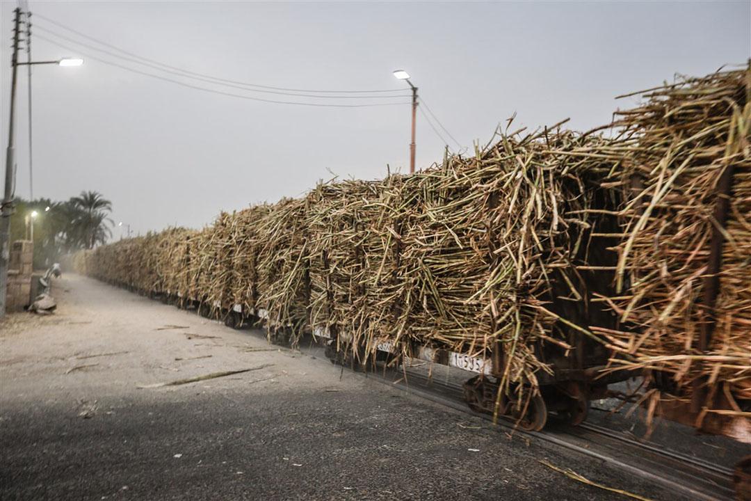 Een trein vol met suikerriet in de regio Luxor in Egypte. - Foto: ANP