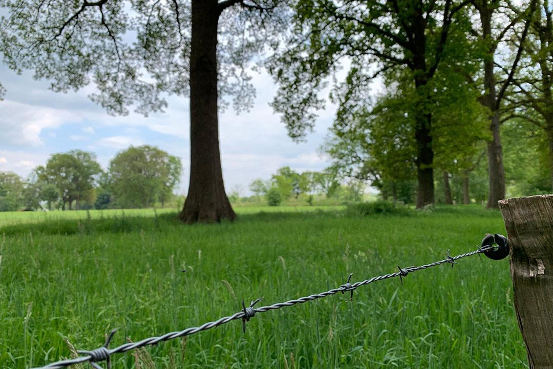 Grasland, nabij een Natura 2000-gebied in Twente. - Foto: Martijn ter Horst