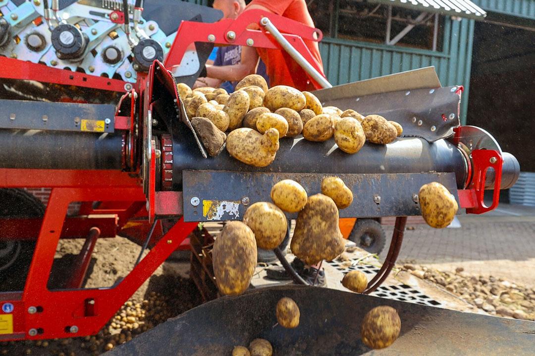 Oogst van vroege aardappelen, vorige week in Bergeijk (N.-Br.). - Foto: Bert Jansen