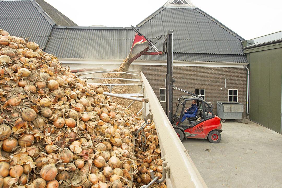 Zaaiuien laden. - Foto: Koos van der Spek