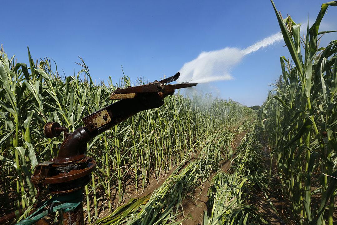 Beregenen van mais. Voorheen loonde de investering in beregening voor gewassen als gras en mais niet, maar de derde droge zomer op rij verandert dat. - Foto: Henk Riswick