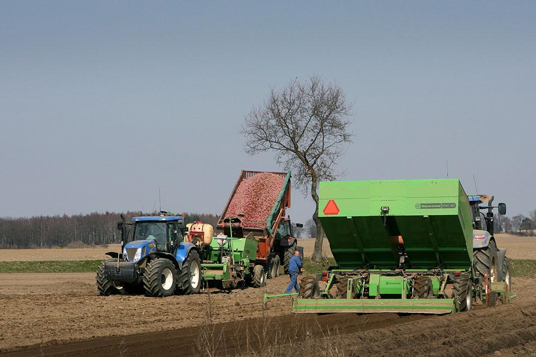 Poten van aardappelen in Polen. Foto: Peter Roek