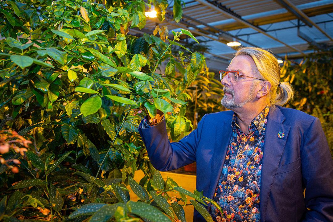 Directeur/eigenaar Rob Baan van Koppert Cress in Monster bekijkt planten in de proeftuin. Foto: Peter Roek