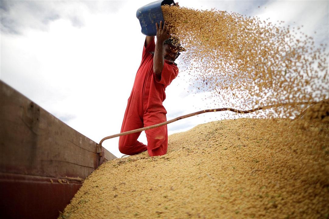 Op dit moment is al 55% van de volgende sojaoogst, die nog niet eens is geplant, op voorhand verkocht aan internationale kopers. Foto: ANP