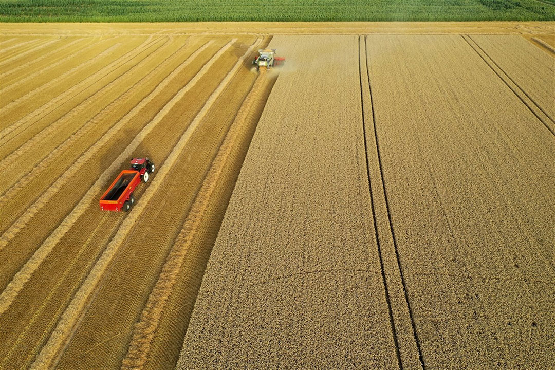 Tarwe-oogst in Noord-Frankrijk. Foto: ANP