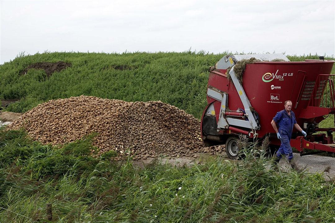 Fritesaardappelen vinden een bestemming als veevoer. - Foto: ANP