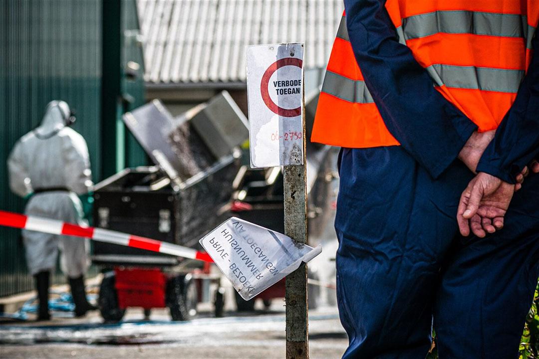 Medewerkers van de NVWA tijdens het ruimen van een nertsenfokkerij in het Brabantse Deurne. Foto: ANP