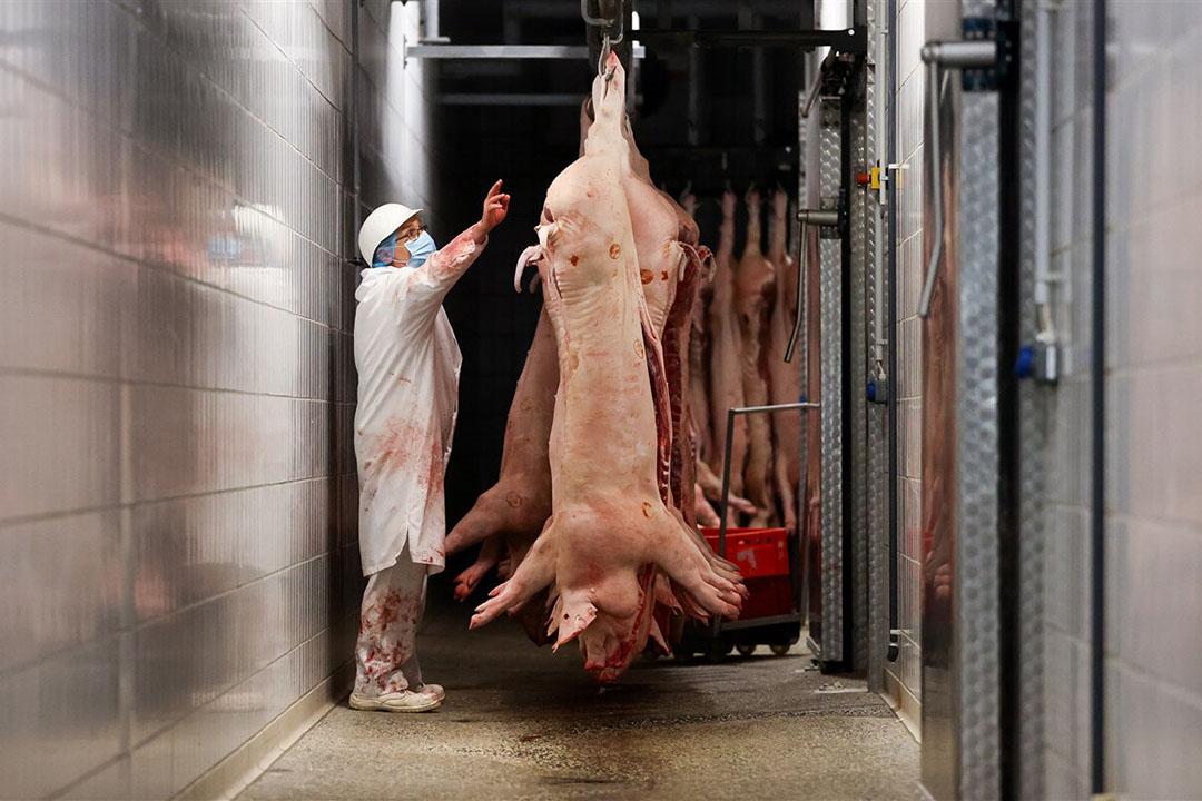Frankrijk vreest dat Duits varkensvlees op de Europese markt wordt gedumpt. - Foto: DPA