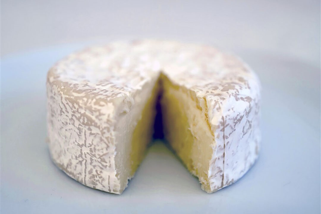 Brucellose komt in Noordwest-Europa nauwelijks voor. Als mensen besmet raken, komt het meestal door het eten of drinken van rauwmelkse zuivelproducten., zoals kaas die gemaakt is van rauwe melk. - Foto: ANP