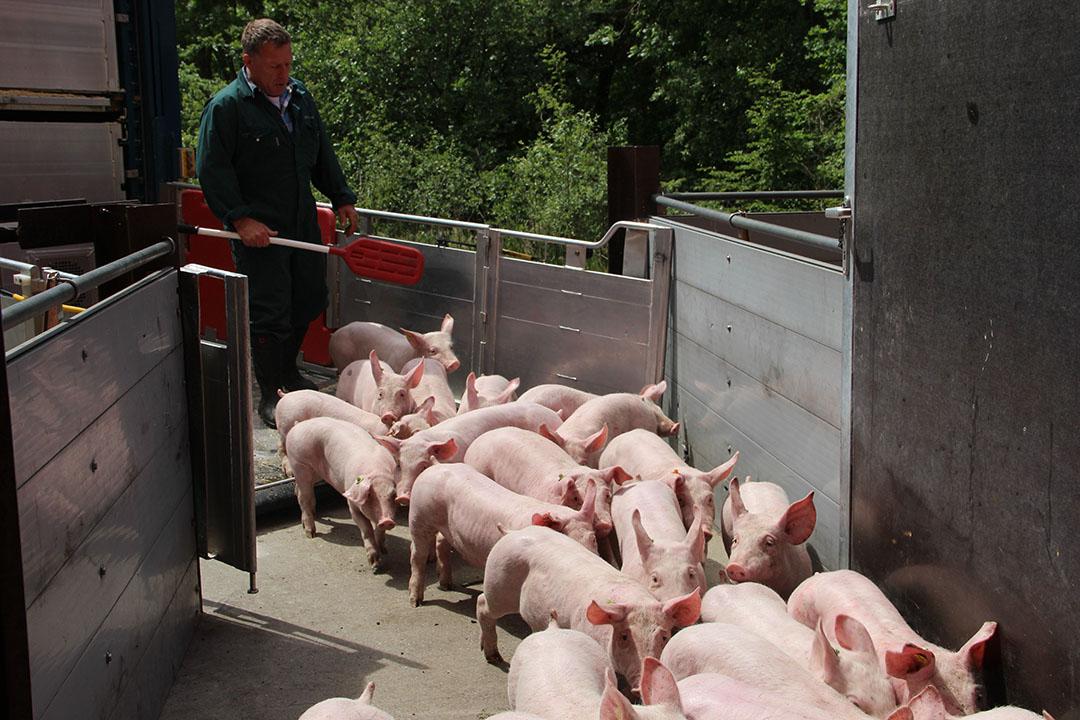 De Duitse vleesvarkenshouders blijven niet zonder meer biggen opleggen. Ze willen eerst meer duidelijkheid over de varkensmarkt. - Foto: Kees van Dooren