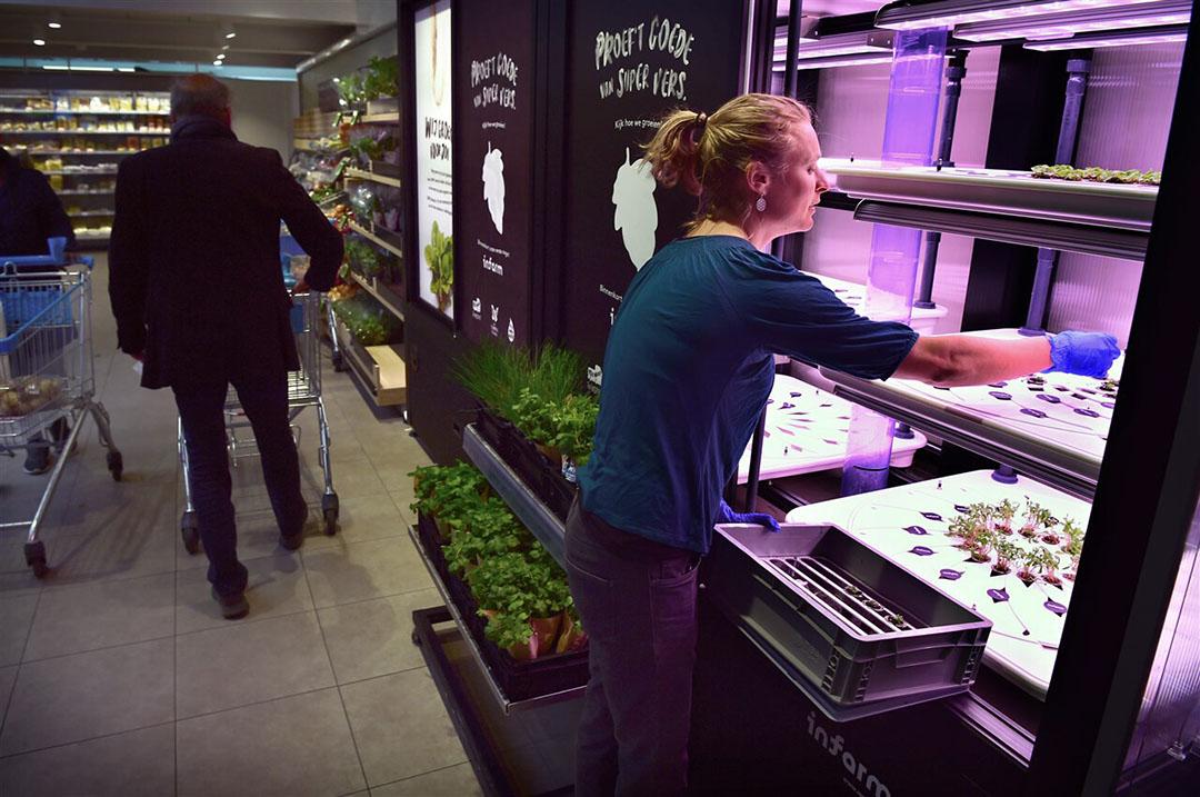 Een medewerker vult plantjes aan in een kas van Infarm in een supermarkt van Albert Heijn. - Foto: ANP/Marcel van den Bergh