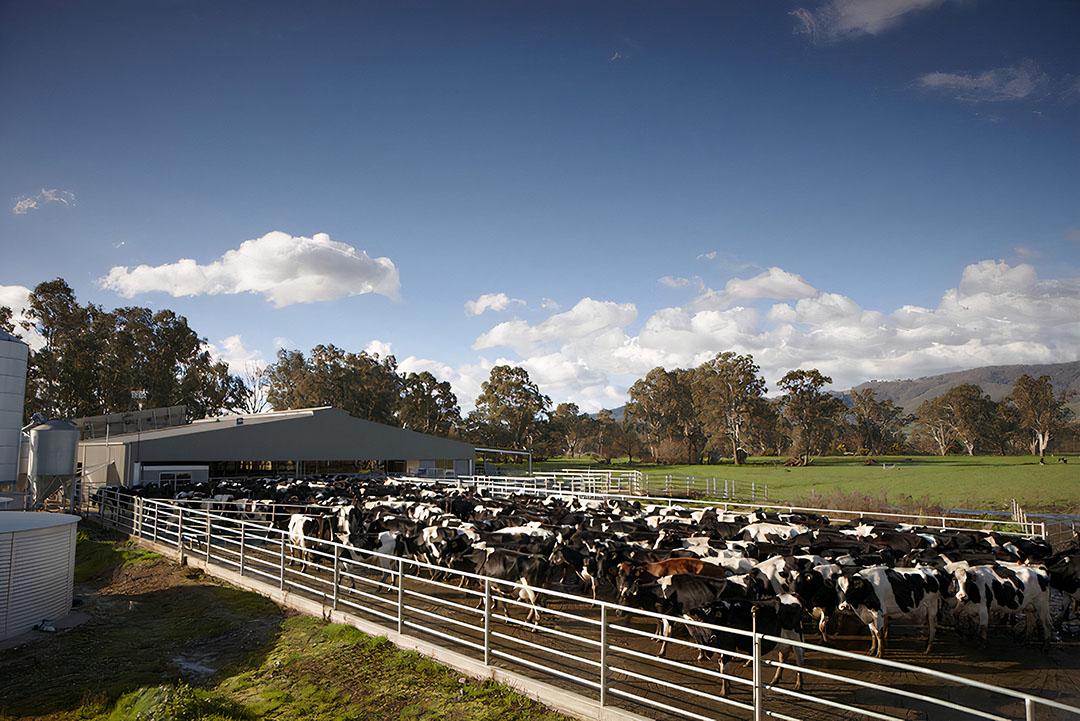 De nieuwe cooperatie telt acht leden met in totaal zo'n 2.800 melkkoeien en 22 miljoen kilo melk. - Foto: Stuart Crosthwaite