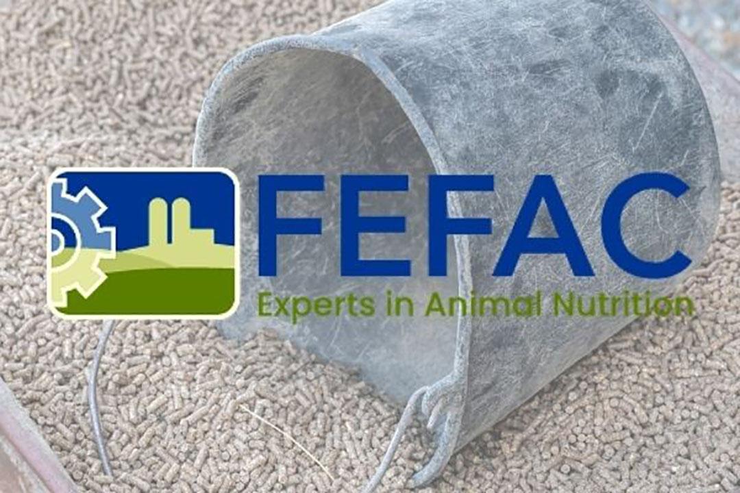 Foto en logo: Canva en Fefac