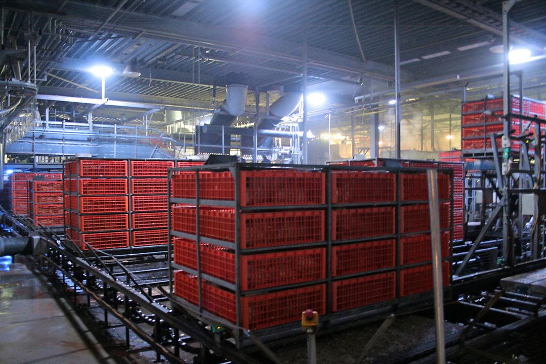 Containers met kuikens staan klaar in de wachtruimte van een pluimveeslachterij. - Foto: Hans Bijleveld