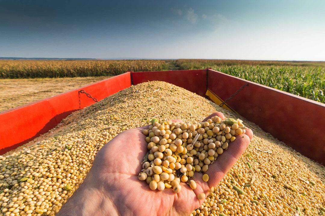 Soja is voor Argentinië het belangrijkste gewas en vertegenwoordigt ruim de helft van de landbouwexport van het Zuid-Amerikaanse land. - Foto: Canva/fotokostic