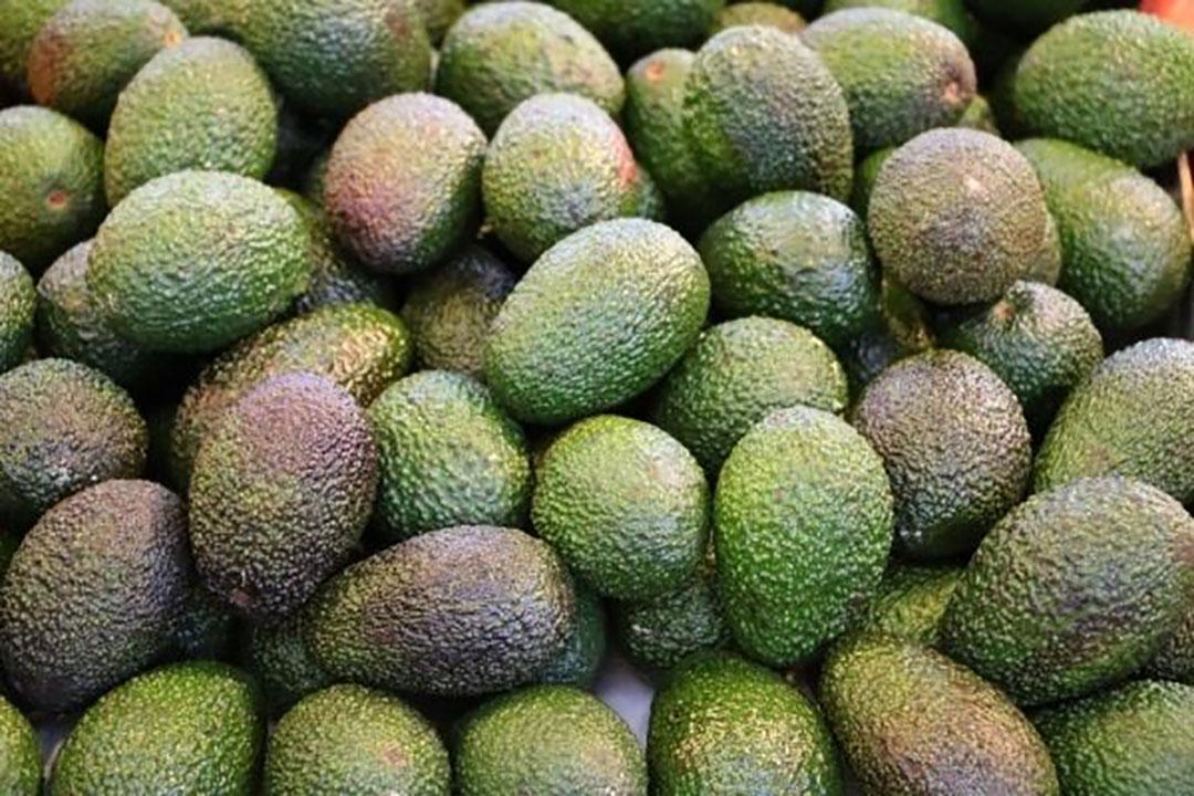 De avocado wint de laatste jaren aan terrein. Foto: Canva