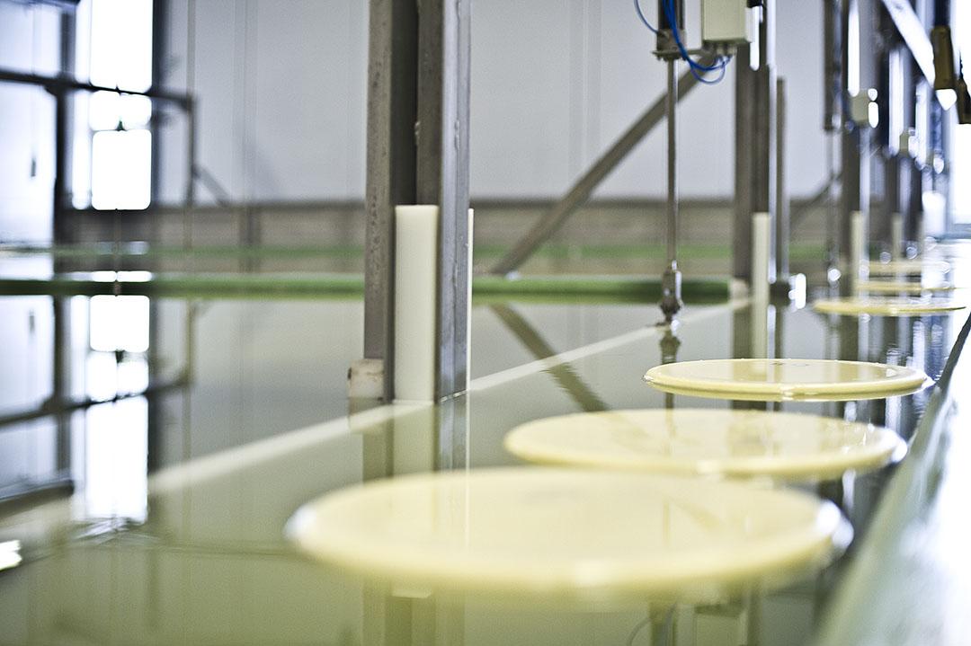 wei-eiwit is een bijproduct die ontstaat bij de productie van kaas. Foto: Bel Leerdammer