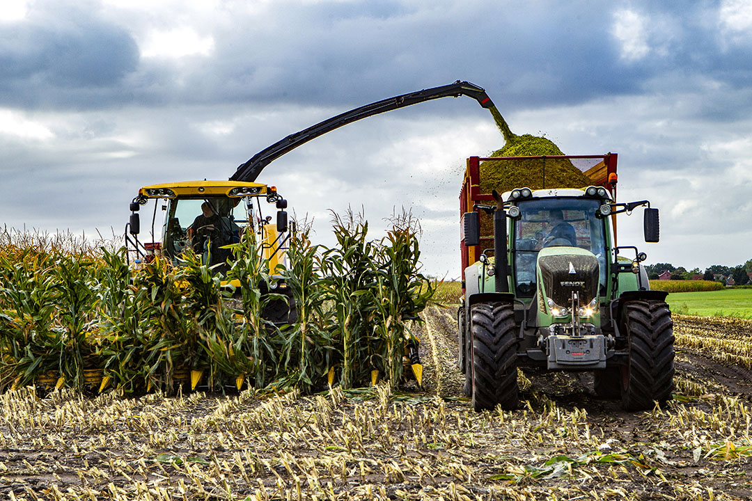 De oogst van mais. Op veel plekken in Nederland is de maisoogst in volle gang. - Foto: Ronald Hissink