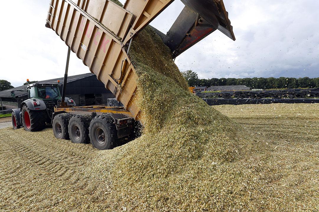 De ruwvoerpositie van melkveehouders is beter dan vorig jaar, waardoor er naar verwachting minder mais verhandeld gaat worden. - Foto: Bert Jansen