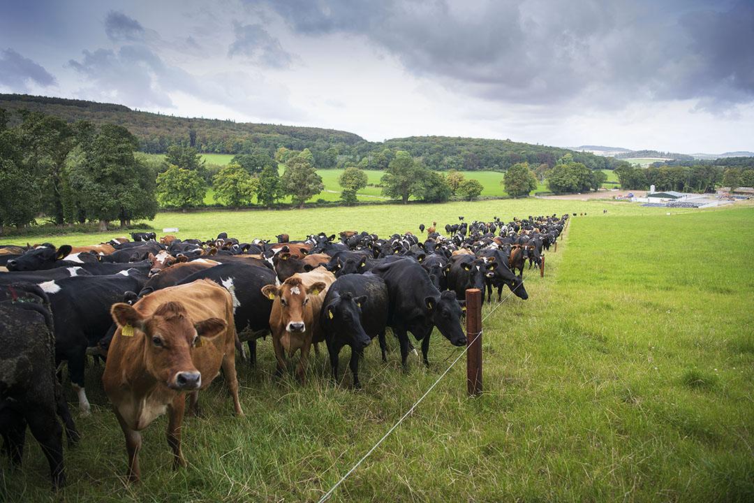 Iers landbouwbedrijf. Foto: Mark Pasveer