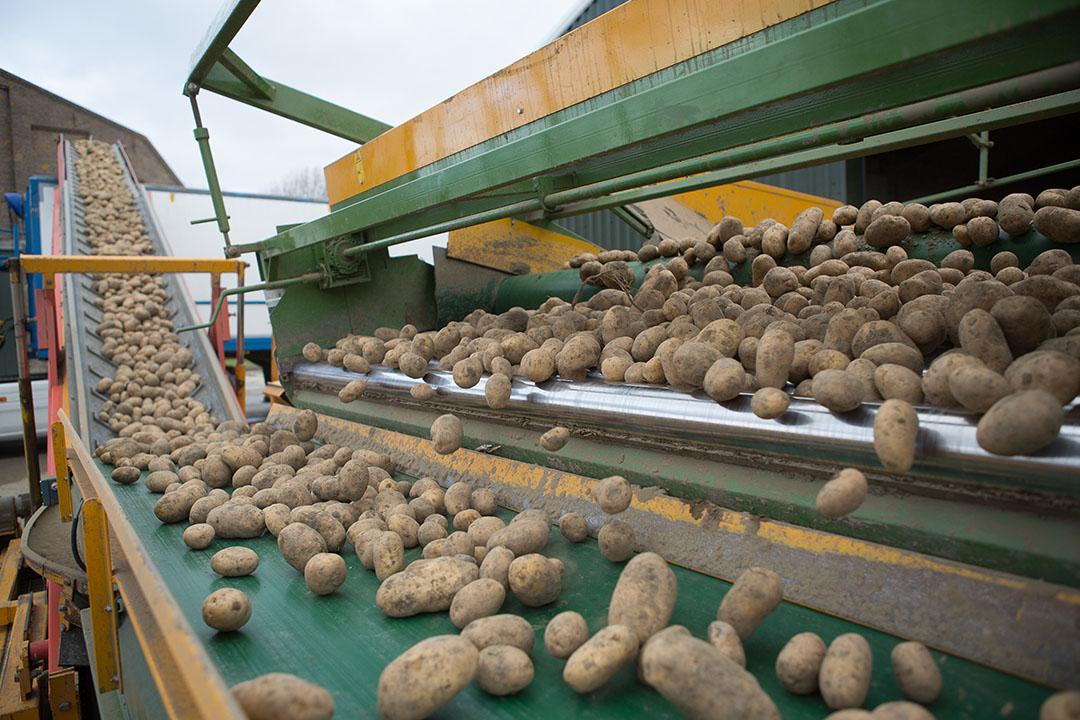 Het laden van fritesaardappelen. Foto: Peter Roek