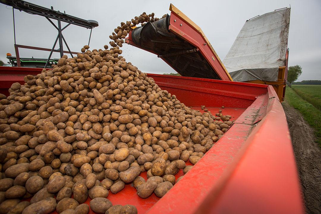 Archiefbeeld van het rooien van Fontane-aardappelen. - Foto: Peter Roek