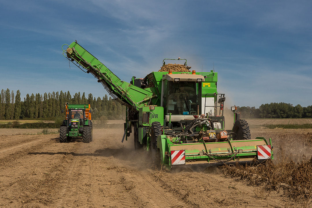 De gemiddelde aardappelopbrengst per hectare komt naar schatting zo'n 2.000 kilo hoger uit. - Foto: Peter Roek