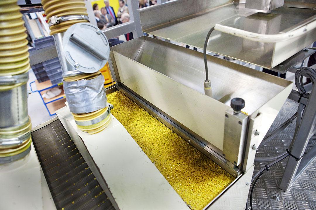 Groenteveredelingsbedrijf Rijk Zwaan verhoogde de omzet in vrijwel alle regio's waar het bedrijf actief is. Foto: ANP