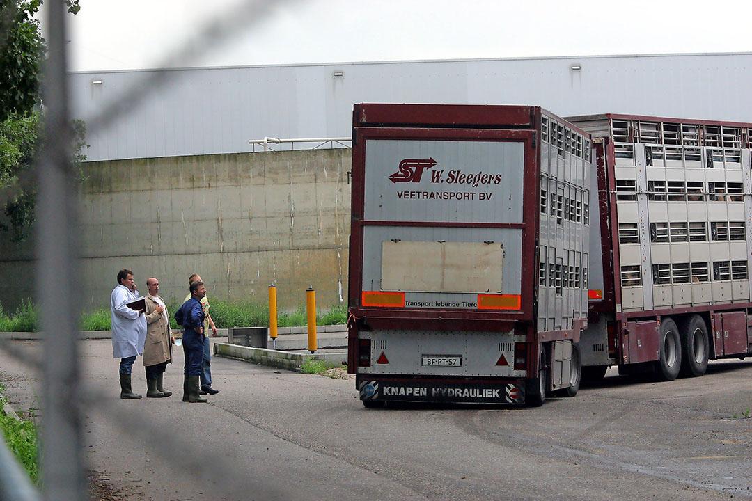 Son en Breugel (N.-Br.), 6-8-2002. Varkens die het MPA-hormoon hebben binnengekregen wachten in een veetransportwagen op het terrein van Dumeco om geslacht te worden. - Foto: ANP