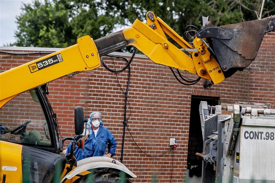Ruiming van een nertsenbedrijf in juli van dit jaar in Ospel. In totaal zijn met de nieuwe besmettingen van vandaag 67 bedrijven besmet. - Foto: ANP