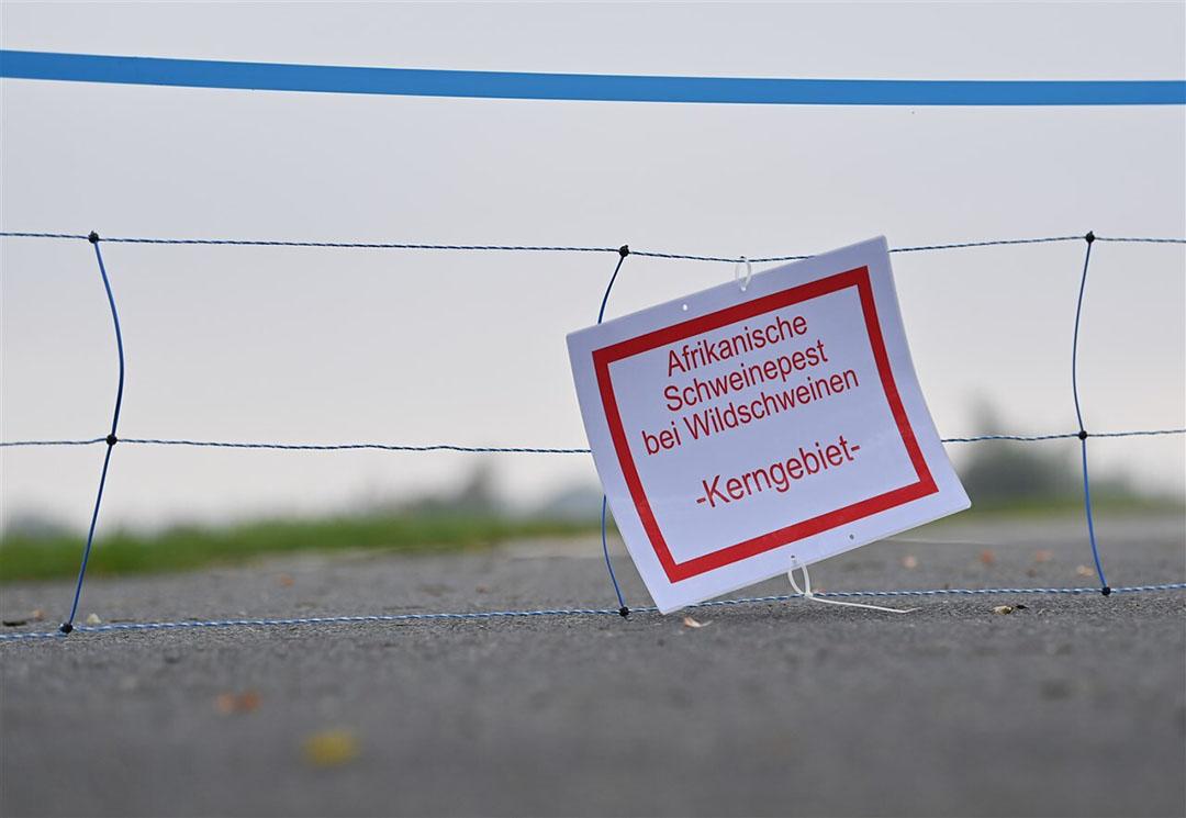 Een mobiele elektrische afscheiding in Brandenburg, waar opnieuw met Afrikaanse varkenspest besmette wilde zwijnen zijn gevonden. - Foto: ANP