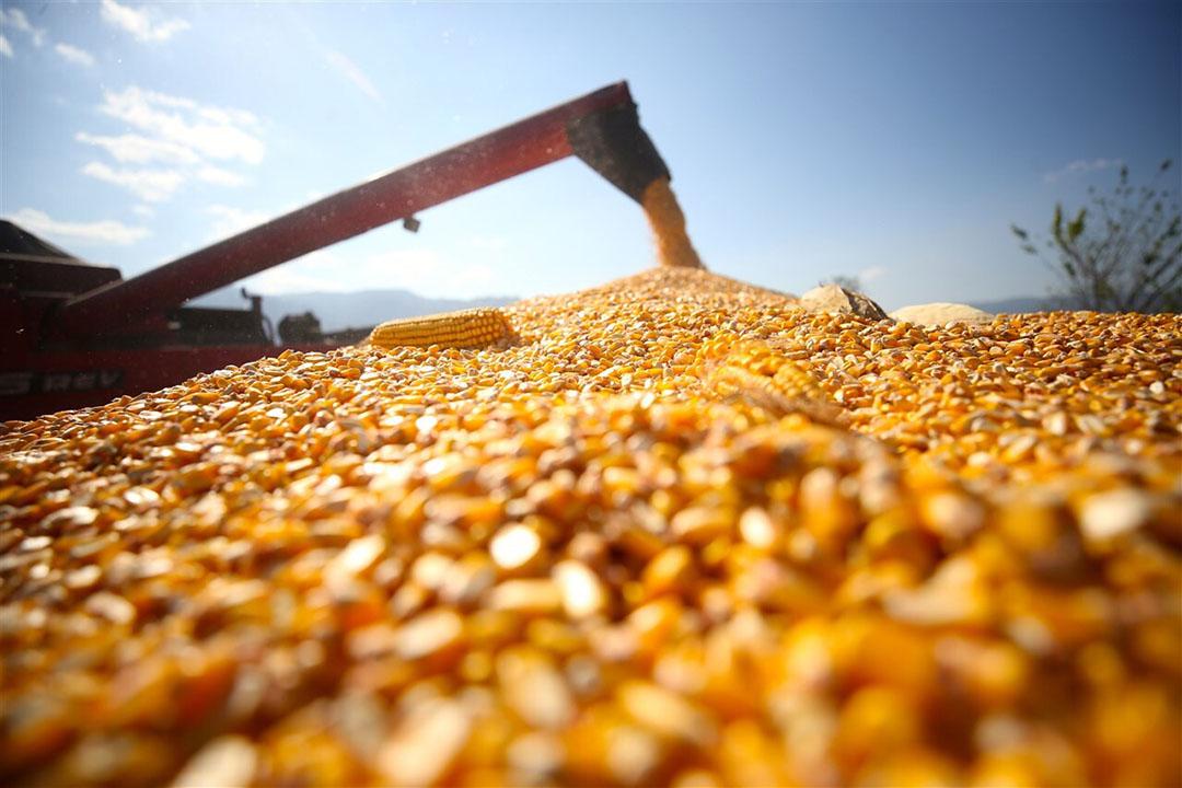 Men ziet tegenvallende opbrengsten van de maisoogst in belangrijke productiegebieden. Dat geldt voor zowel de Verenigde Staten als de EU en Oekraïne. Foto: Anadolu Agency via ANP