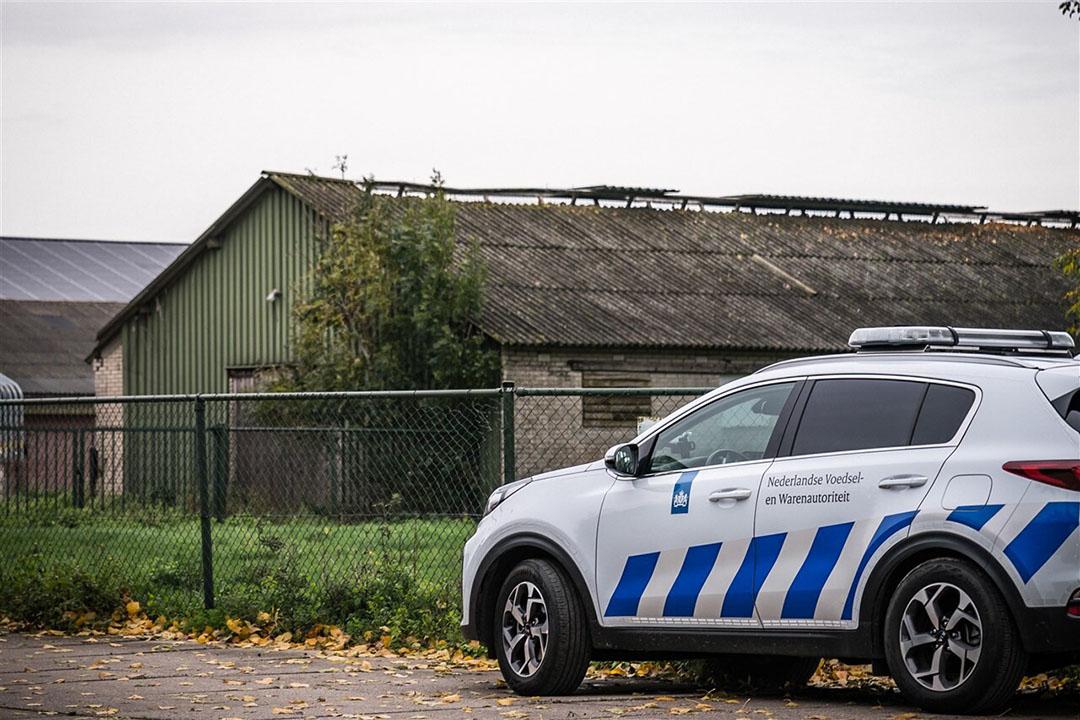 De 35.700 besmette vleeskuikenouderdieren van het bedrijf in Altforst zijn vandaag geruimd. Foto: ANP