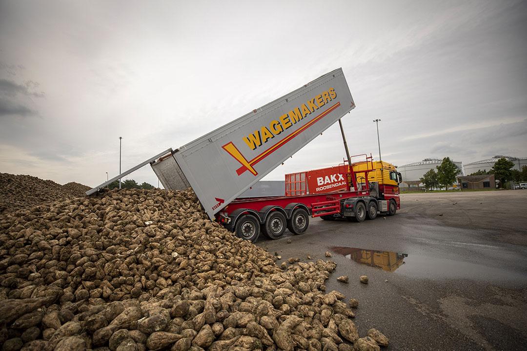 Het aanleveren van suikerbieten bij Cosun Beet Company in Dinteloord. - Foto: Roel Dijkstra