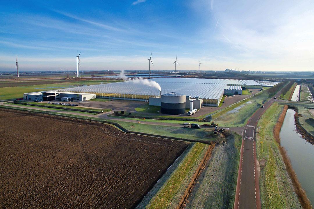TOM maakte het mogelijk voor Brabantse glastuinders om te groeien. - Foto: TOM