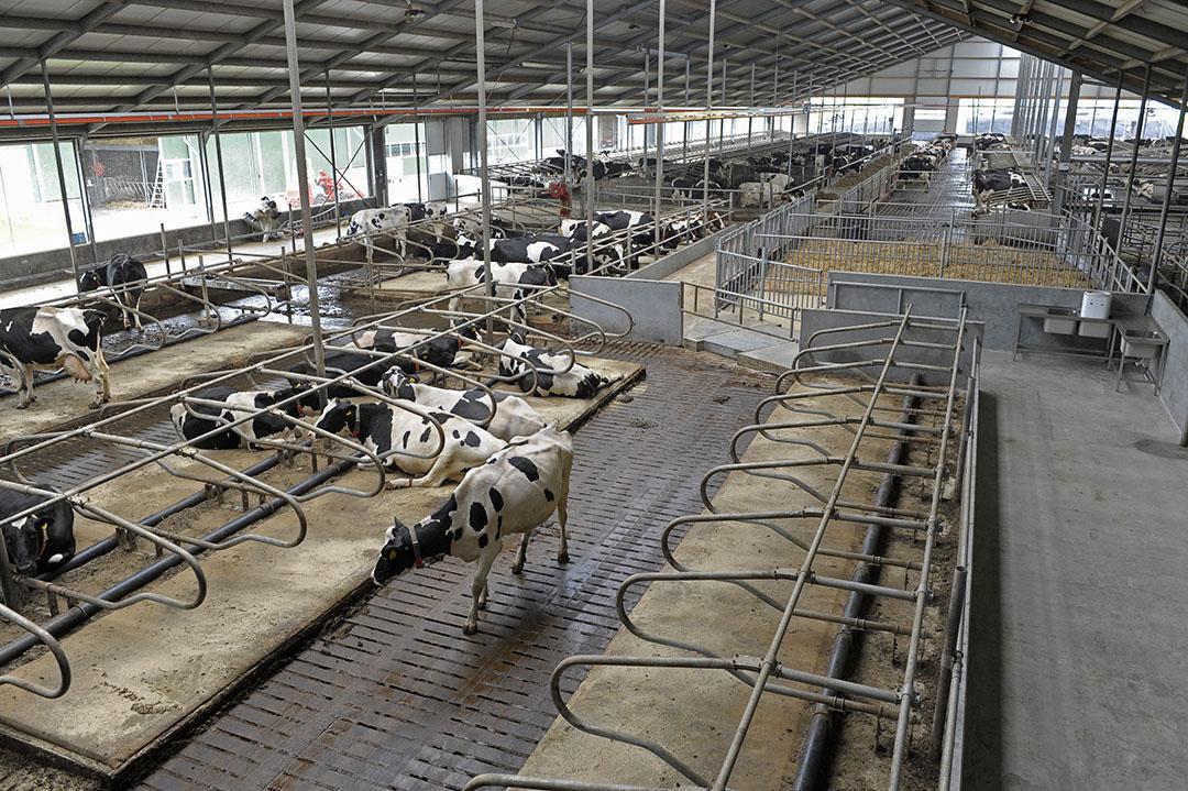 Melkveestal met emissiearme vloer. - Foto: Fotopersbureau Dijkstra