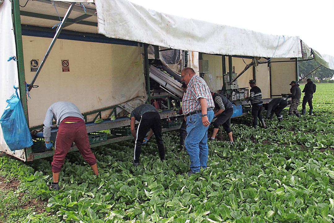 """Ondernemer Rudolf Behr loopt achter de oogstmachine: """"Je moet je eerst verdiepen in de situatie, het land, de cultuur. Niet domweg ons 'Duitse model' in een ander land willen kopiëren."""" - Foto's: Stan Verstegen"""