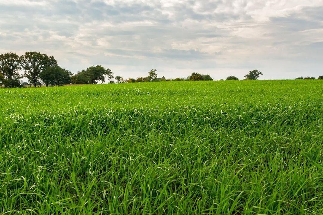 De daling is vooral veroorzaakt door een lagere prijs voor grasland. Foto: Canva