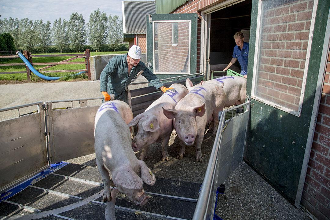 Het laden van slachtzeugen. - Foto: Jan Willem Schouten